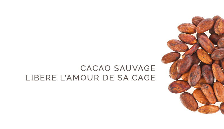 cacao sauvage