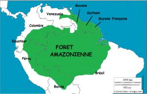 1-amazonie-foret-2-