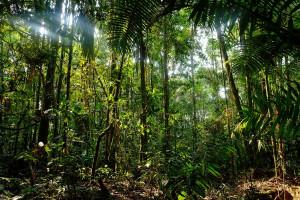 1-amazonie-jungle-2