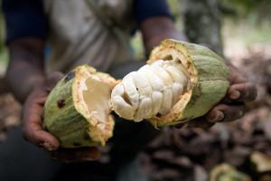1-feve-cacao-originelle-3